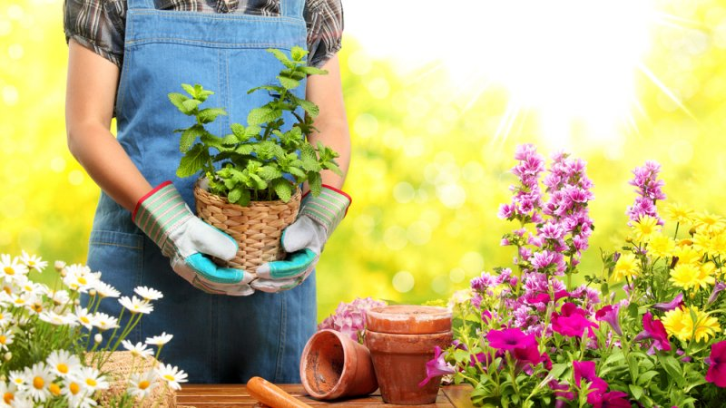 Wls landscaping blog gardening tips western landscape for Gardening 101 australia