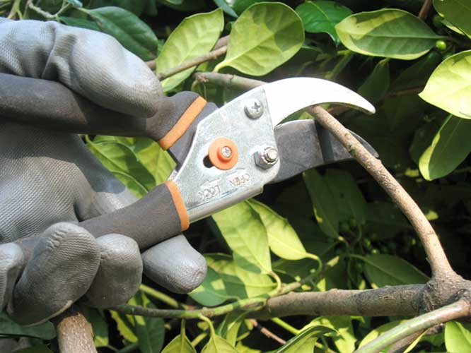 Pruning plants and trees during autumn