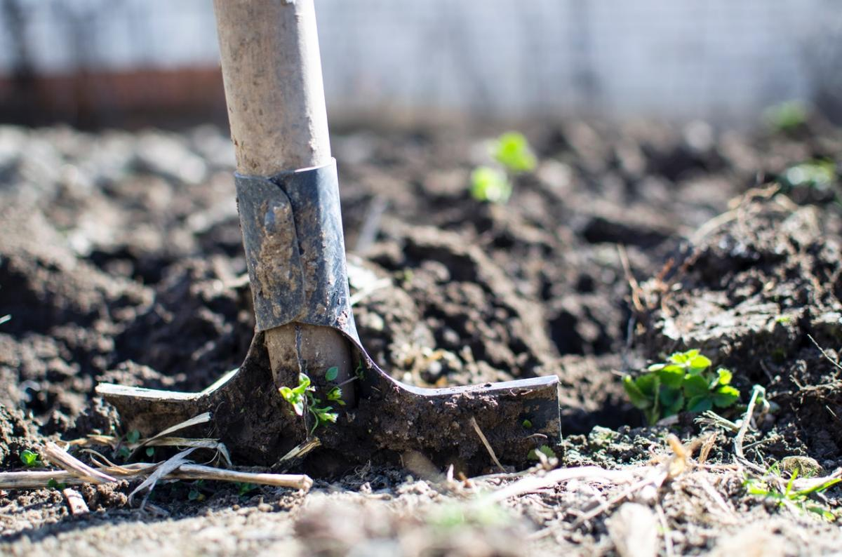 Soil & Compost will help your garden thrives